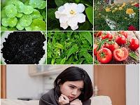 Membuat Ramuan Herbal untuk Obati Demam dari Prof. H.M. Hembing Wijayakusuma