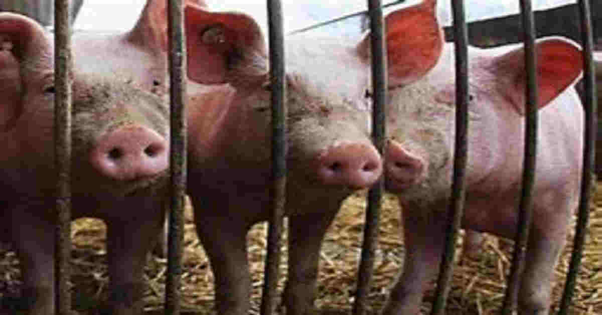 Test report affirms African Swine Fever episode in 3 Meghalaya locale.