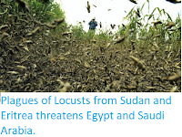 https://sciencythoughts.blogspot.com/2019/02/plagues-of-locusts-from-sudan-and.html