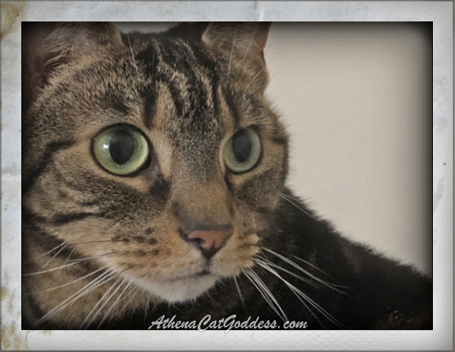 tabby cat with wide eyes close-up and large whiskers