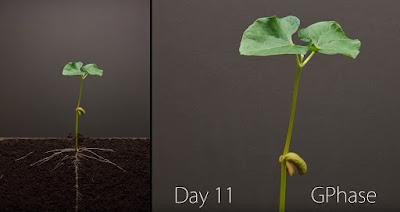 Πως αναπτύσσονται τα φυτά σε 25 ημέρες