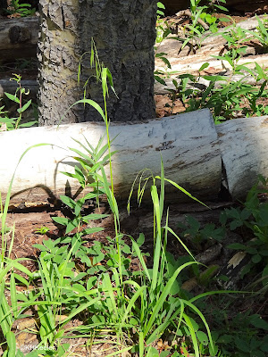 a grass, Taos New Mexico forest