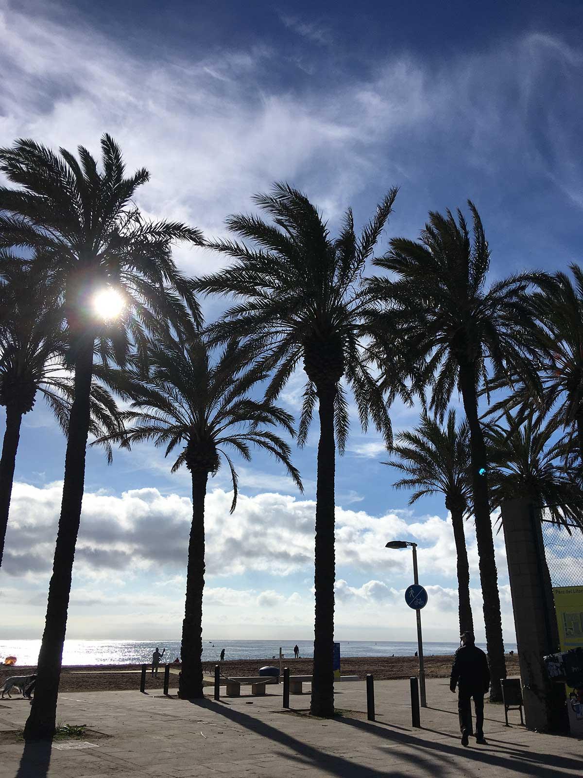 Palmeras en la playa de Sant Adrià