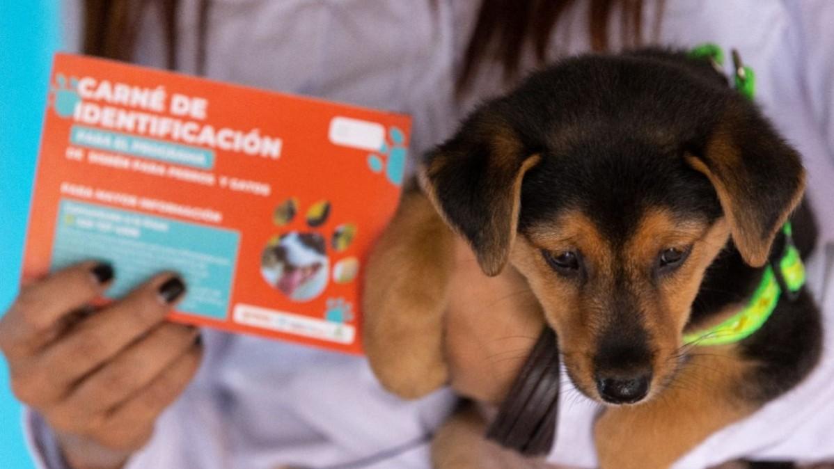 Más de 2.000 animales han sido atendidos durante este año gracias al programa de Sisbén para perros y gatos