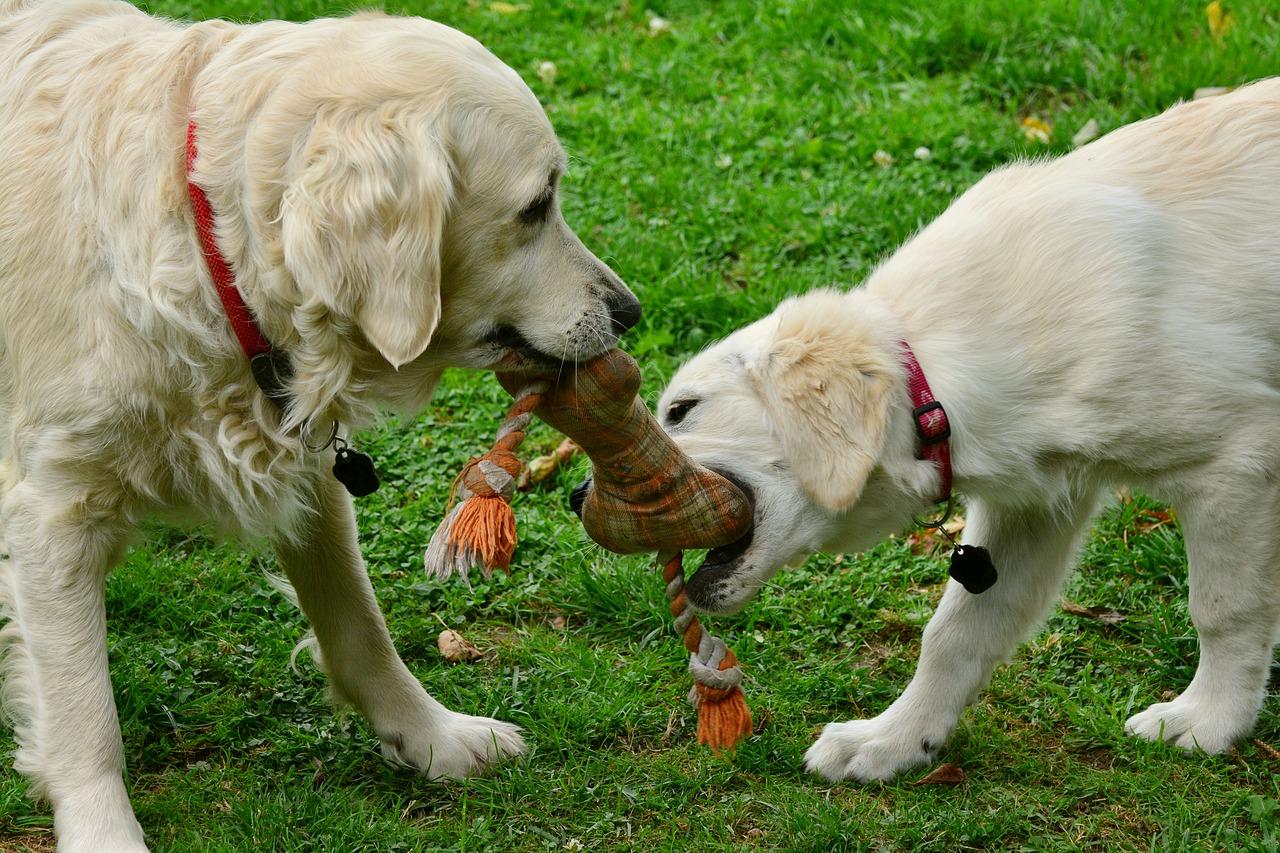Découvrez comment fabriquer des jouets faits maison pour chiens et chats