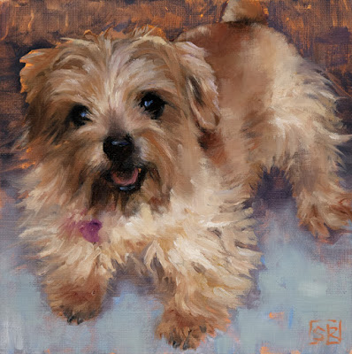 Norfolk Terrier, dog portrait, fine art, commissioned pet portrait, oil painting, © Shannon Reynolds 2016