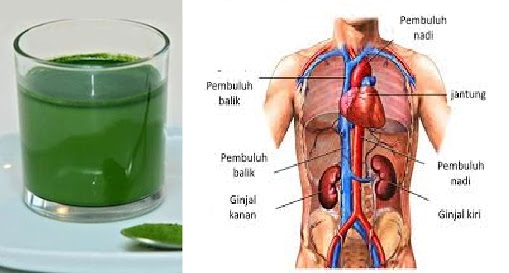 No Need to Pay Expensive Doctors, !! Enough With $ 1 Your Kidneys Will Be Total Health