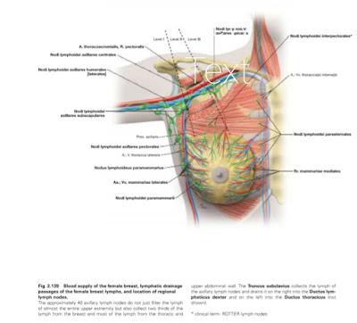 Anatomi Payudara (Mammae) Pada Tubuh Manusia