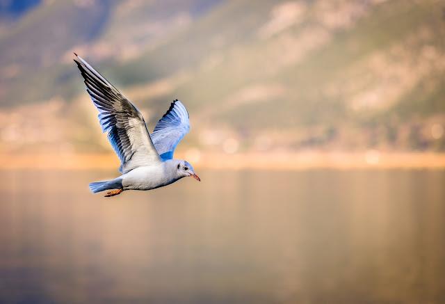 أنواع الطيور لطائر مميز