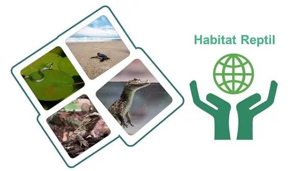Habitat Reptil sesuai klasifikasinya
