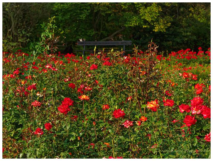 Ogród botaniczny różanka