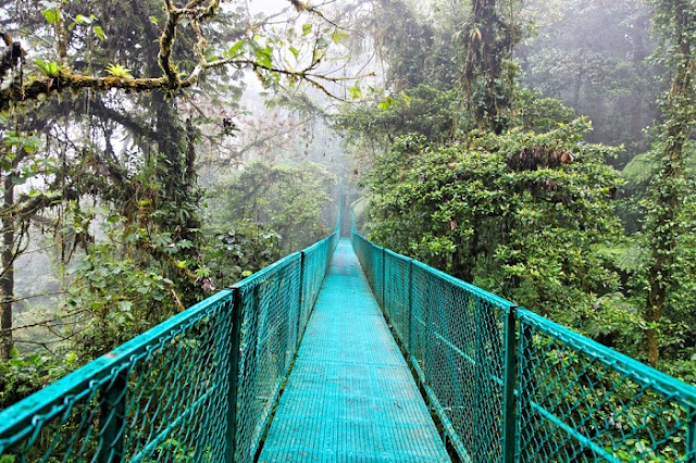 Monteverde Cloud Forest Biological Reserve (Costa Rica)