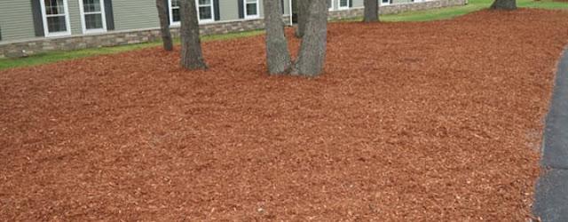 3 Fallacies About Cedar Mulch, Debunked