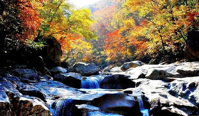 https://www.trazy.com/experience/detail/korea-fall-foliage-tour-from-busan