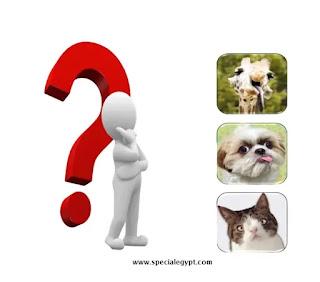 هل تصاب الحيوانات بمتلازمة داون ؟!