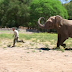 Italian tourist trampled to death by elephant in Kenya