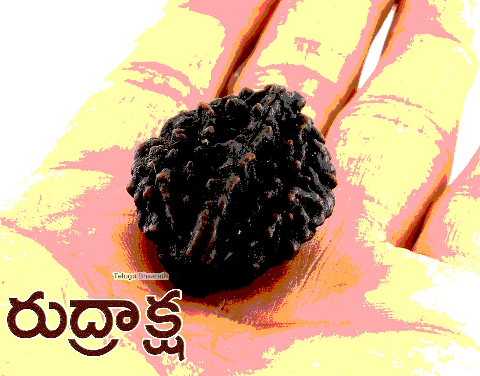 నకిలీ రుద్రాక్షలు గుర్తించడం ఎలా - Nakilee Rudrakshalu Gurtinchadam