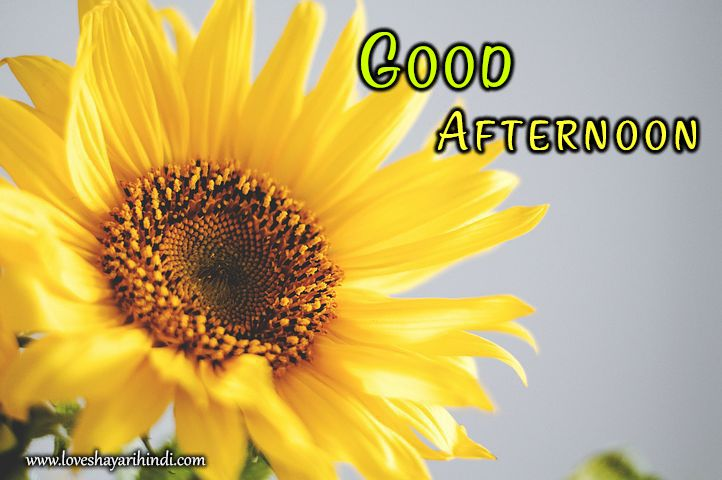 Top Good Afternoon SMS Status Shayari Wishes In Hindi