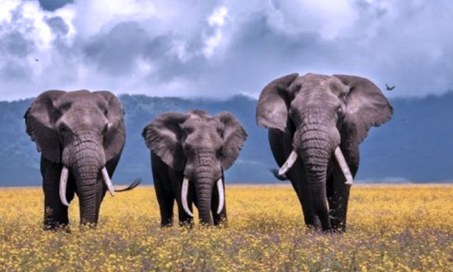 Kepribadian Dari Gajah Untuk pribadimu