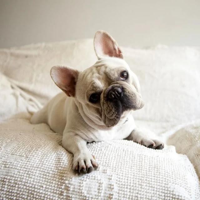Top 10 Most Popular Dog Breeds