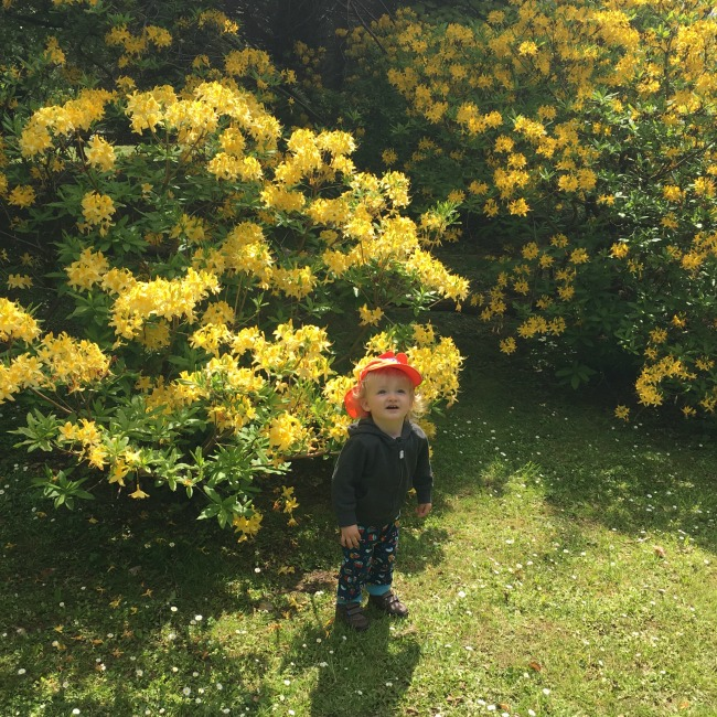St-Fagans-Castle-and-Gardens-toddler-in-front-of-rhododendrum