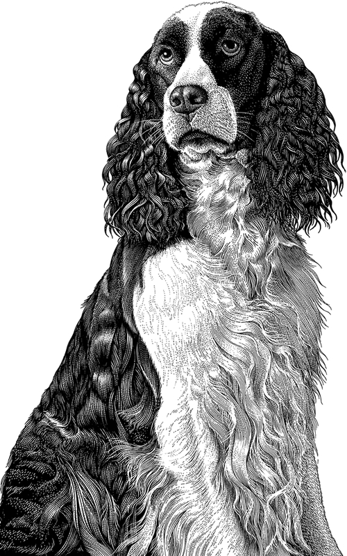 14-Springer-Spaniel-Michael-Halbert-Scratchboard-Images-of-Animals-and-Architecture-www-designstack-co