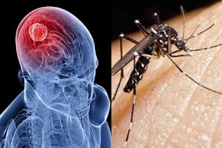 Alerta en México por la presencia del mosco negro, transmisor de un virus mortal.