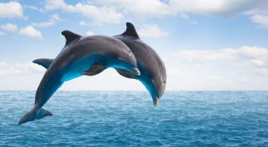 The Dolphins | by - Carol Ann Duffy