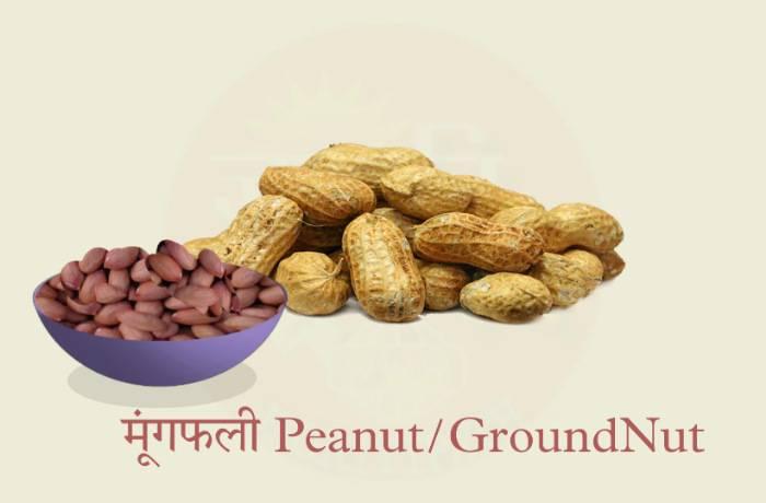 Peanut Groundnut