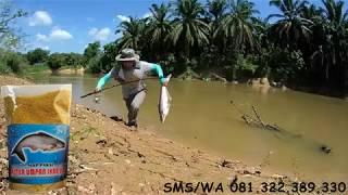 Umpan Ikan Patin Khusus Di Alam Liar