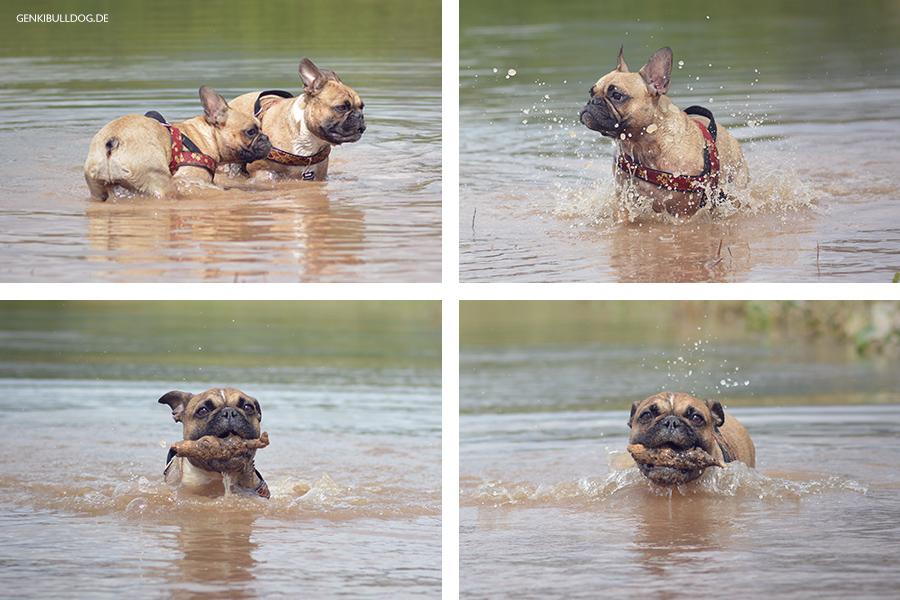 Das Leiden eines Nichtschwimmerhundes