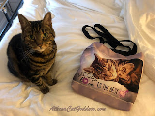 tabby cat sits on bed with tote bag