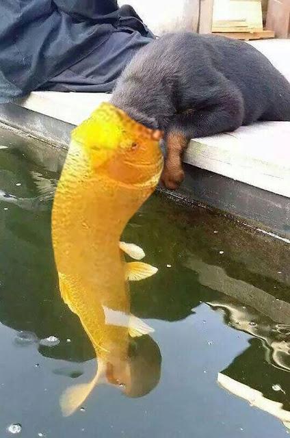 Nụ hôn xuyên chủng loại của chú chó nhỏ