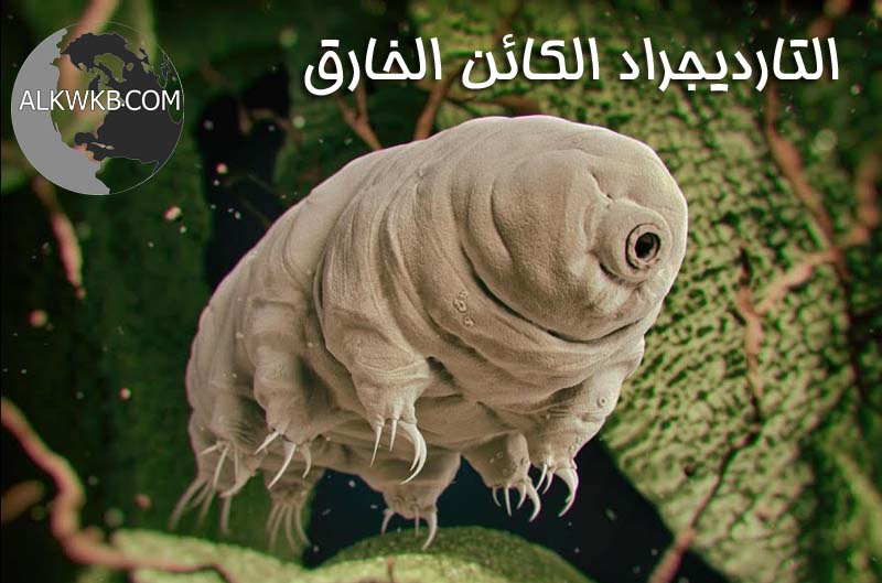 Tardigrade The Super Creature