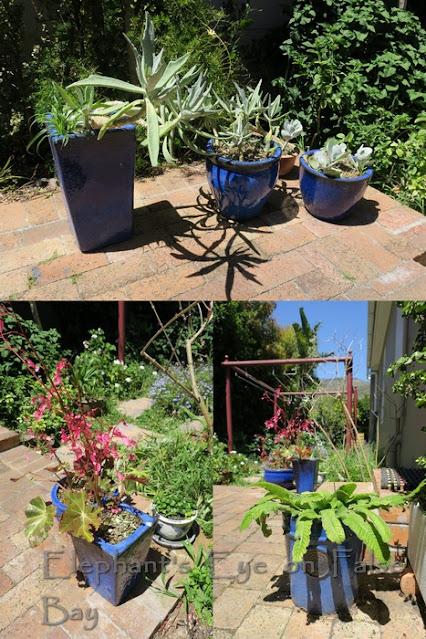 Blue pots sunnyside and sunnyside up (shade)