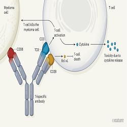 Identificando a fonte de células T infiltrativas de tumor
