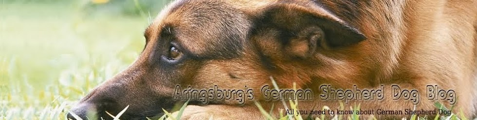 Information About German Shepherds - Raising, Training German Shepherd Puppies, Germán Shepherd