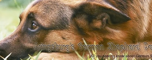 Information About German Shepherds - Raising, Training German Shepherd Puppies, Germán Shepherd: Can Reinforcement Backfire With German Shepherds?