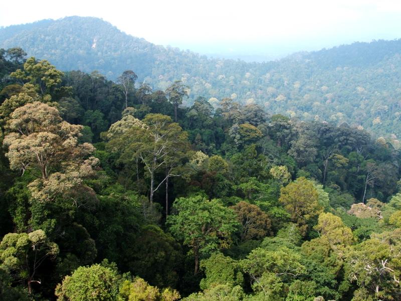 Bioma Hutan Hujan dan Cirinya - Gurugeografi.id