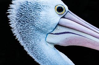 ave, nombre científico de animales, cigüeña