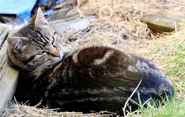 tabby cat using a piece of wood as a pillow