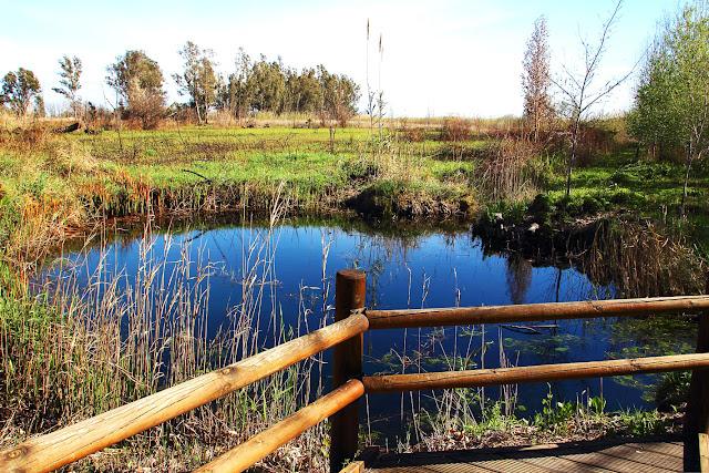 Ullals de Baltasar, Delta del Ebro