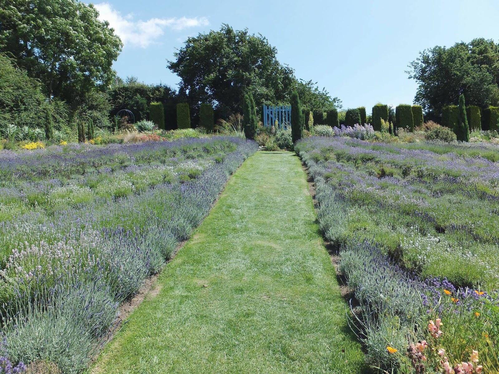 Lavender-Gardens