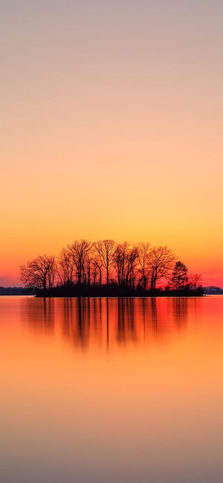 silhouette of trees near body of water wallpaper