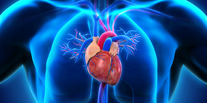 Heart attack: Good time for a heart attack?