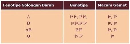 Hubungan antara Fenotipe Golongan Darah, Genotipe, dan Macam Gamet