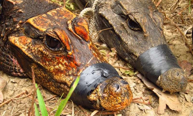 В пещерах Африки нашли новый вид крокодилов