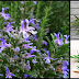 Rosemary Oil: Nature's Gift That Maintains Respiratory Health