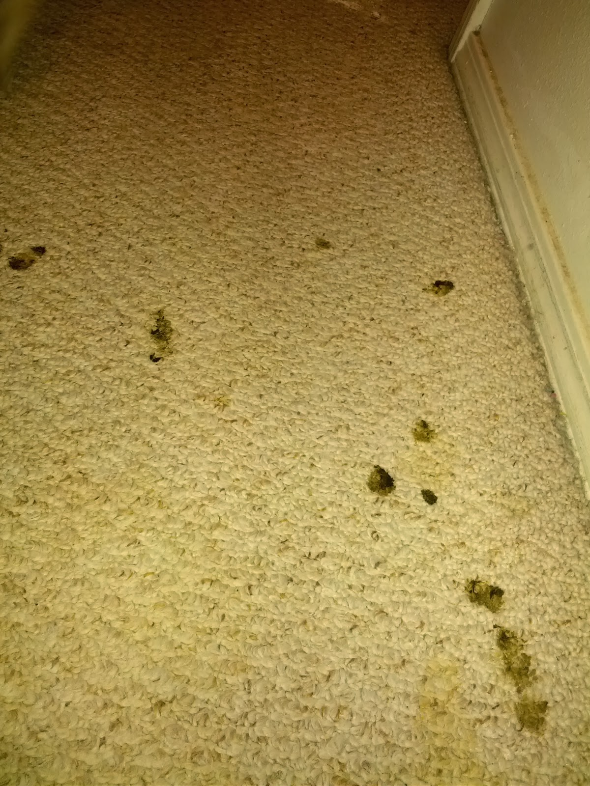 A Dog And His Mom How To Clean Up Puppy Diarrhea Out Of Your