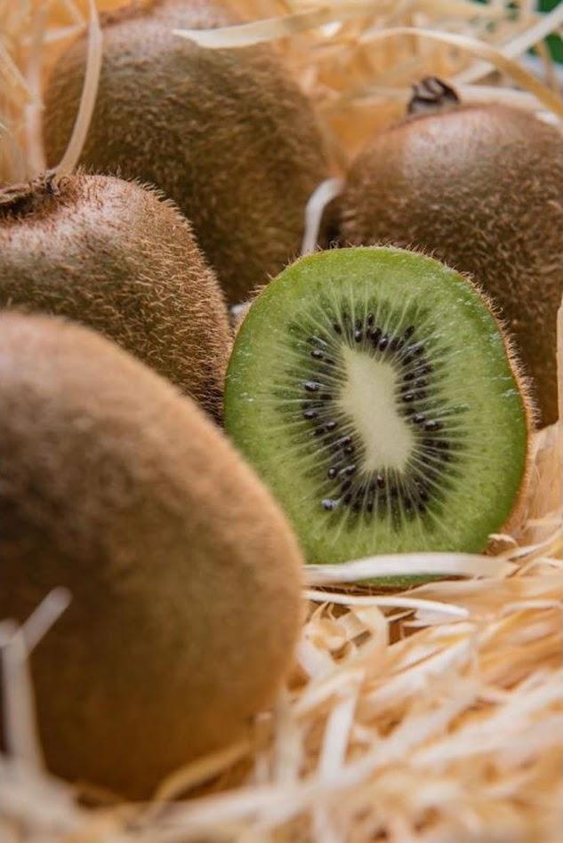 bibit buah kiwi benih pohon tanaman buah okulasi bisa untuk tabulampot taman Sumatra Selatan